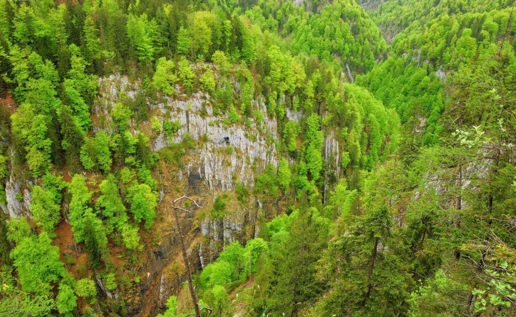 Buchenmischwald mit Schluchtwaldcharakter